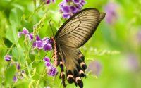 mơ thấy bướm đánh con gì
