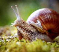 Mơ thấy ốc có điềm báo gì? đánh con số nào chắc ăn?